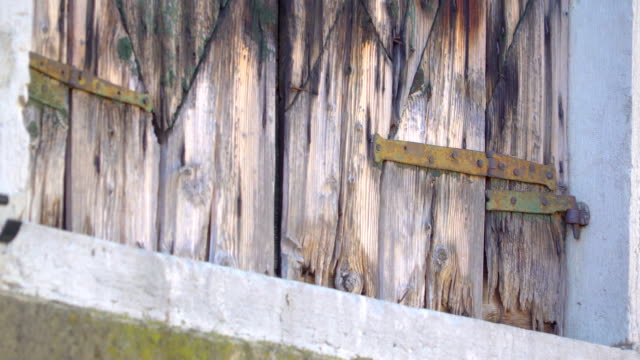 A black Jacksparrow bird flying off the window A black Jacksparrow bird flying off the window of big old medieval house in the city side animal limb stock videos & royalty-free footage