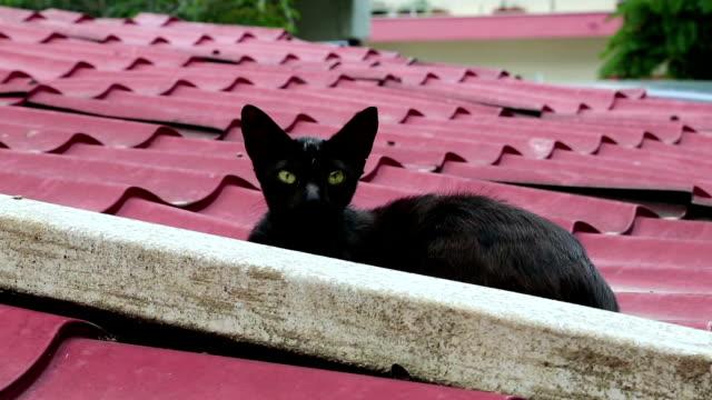 Black kitten lying on the roof