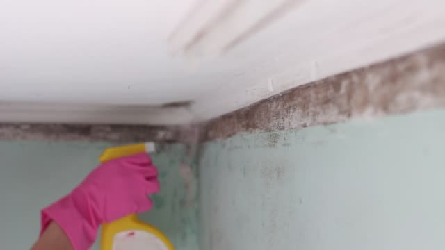 black mold growth in building. cleanup and removal - bleach stock videos & royalty-free footage