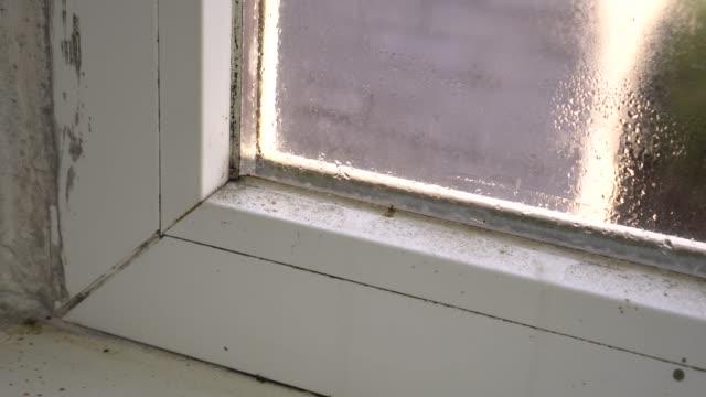 vídeos de stock, filmes e b-roll de crescimento preto do molde no frame de janela. condensação no vidro. problemas de umidade e - sujo