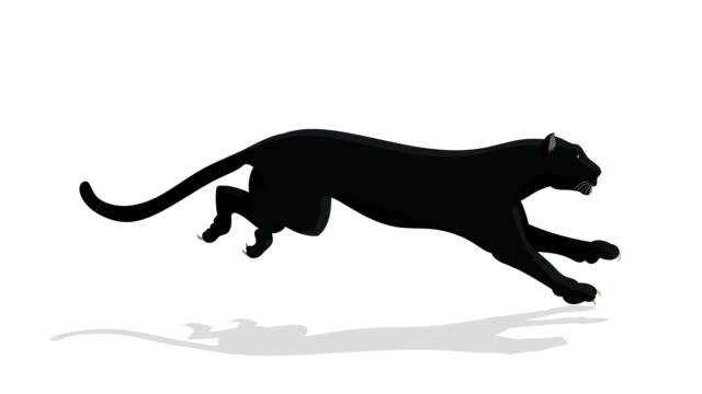 Black Panther Animal Run Cycle Animation