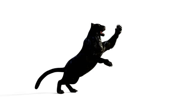 Black Panther Isolate on White Background with Alpha Mark. video