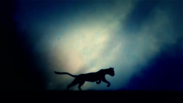 Ein Black-Panther-Läufe schnell in Schlaufen unter einem Blitz Sturm bei Nacht – Video