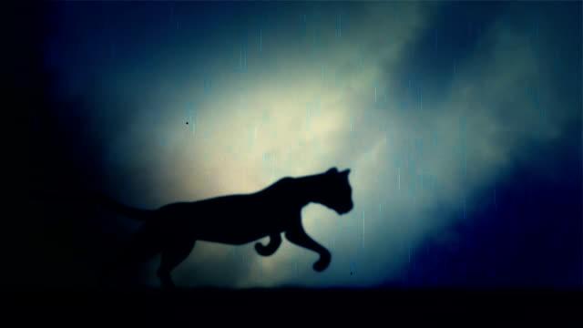 en svart panter körs snabbt i loop under ett regn och åskväder på natten - leopard bildbanksvideor och videomaterial från bakom kulisserna