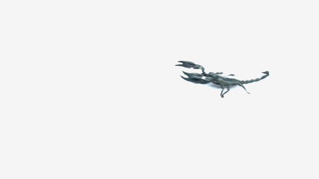 Black scorpion video