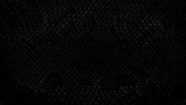 Black snake skin background. Close up. Snake skin background. Close up. 4k  high quality footage. reptile stock videos & royalty-free footage