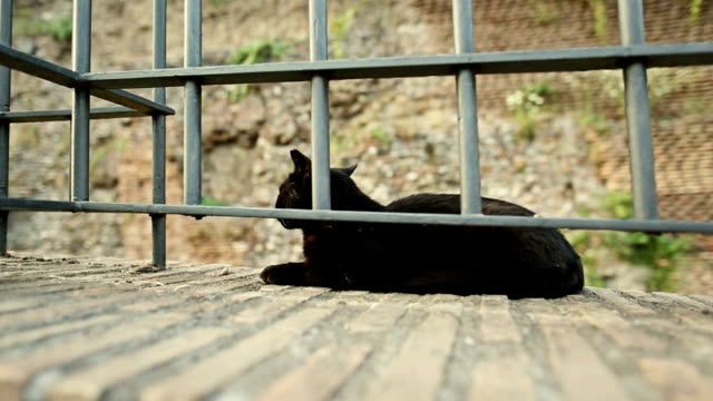 Black stray cat by the Coliseum in Rome