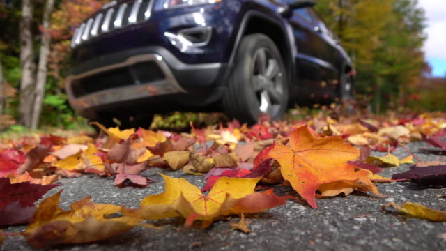 SLOW MOTION CLOSE UP Black SUV car drives on forest road swirling autumn leaves video