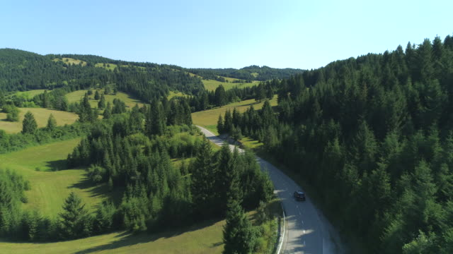AERIAL: Black SUV car driving on road through spruce forest in lush countryside