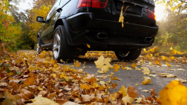 Black SUV crossing through alley with sunlight at background. Colorful autumn foliage flies out from under wheel of auto. Powerful car driving fast along an empty road over yellow leaves at park.