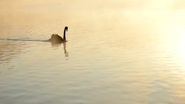 Black Swan video