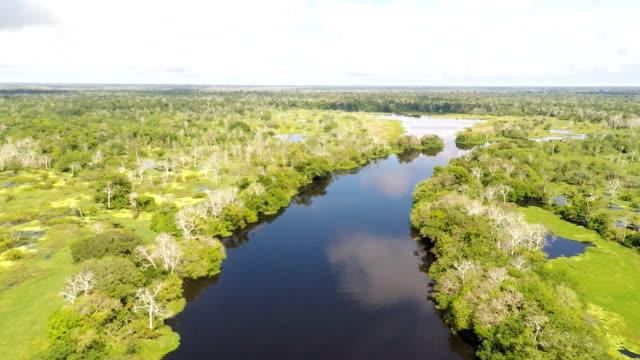 black water tributary of the amazon river, peruvian amazon, peru video