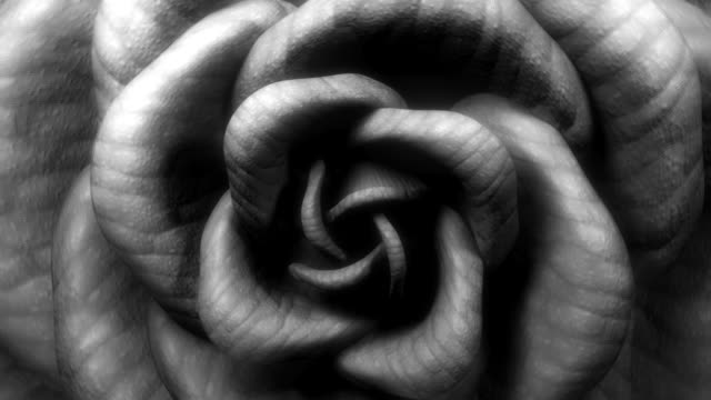 Black & White rose video