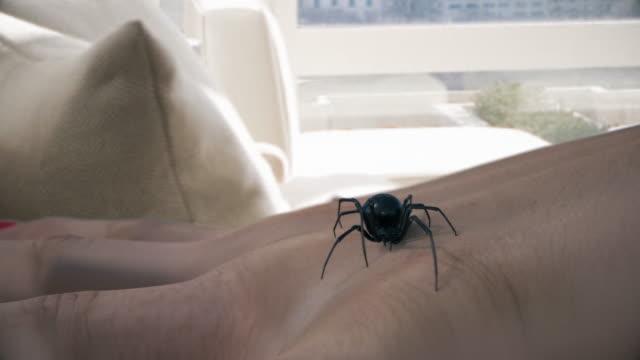 Black widow spider stinging hand