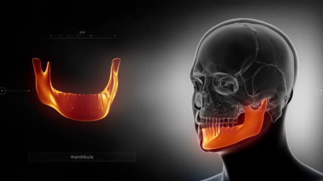 Black x-ray skull animation - mandible or mandibula 3D anatomy concept animal skeleton stock videos & royalty-free footage