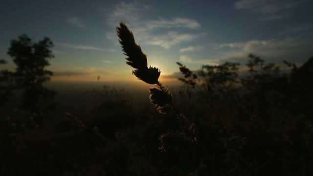 Blade of grass at sunset, in Italy video