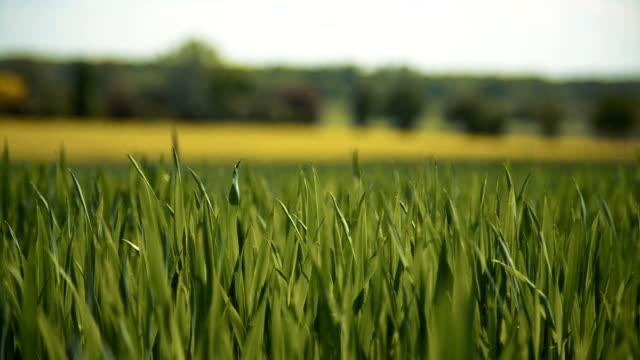 Blades of a Green Grass Field video