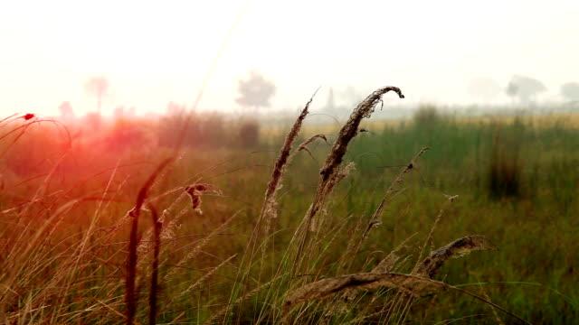 自然の中で風に揺れる草のブレード。 - ハリヤナ州点の映像素材/bロール