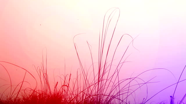 blades of grass swaying through wind in the nature. - haryana video stock e b–roll