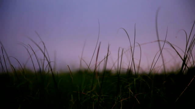 blades of grass swing through wind - grass isolated video stock e b–roll
