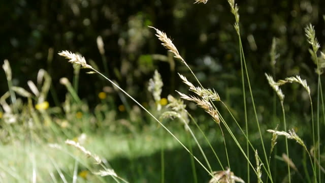 Blades of grass Blades of grass in the wind blade of grass stock videos & royalty-free footage