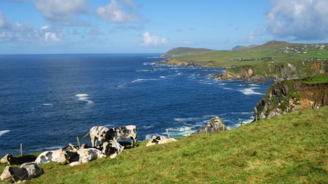 Blasket Sound Coastline Between Dunmore Head And Clogher Head video