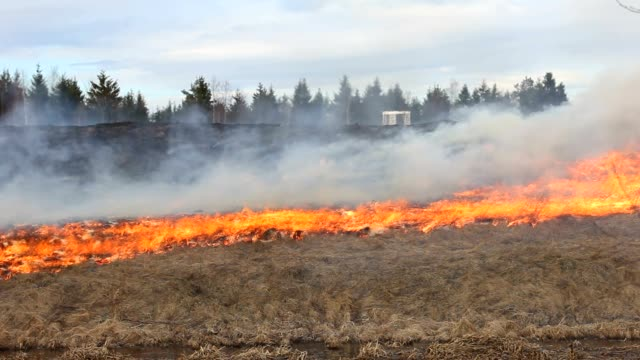 A blazing Fire in the field. Flames devouring the grass and forest. siberia stock videos & royalty-free footage