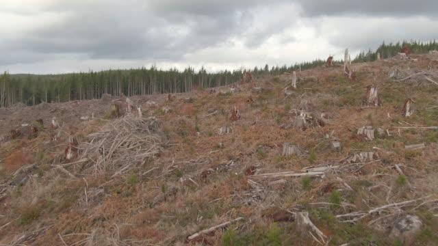 ドローン:緑豊かな森の真ん中に大きなクリアランスの荒々しい空中ショット。 - 残骸点の映像素材/bロール