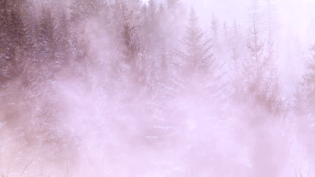 dağlarda çam ormanı tarafından geçen bir sis kasvetli görüntüleri - zakopane stok videoları ve detay görüntü çekimi