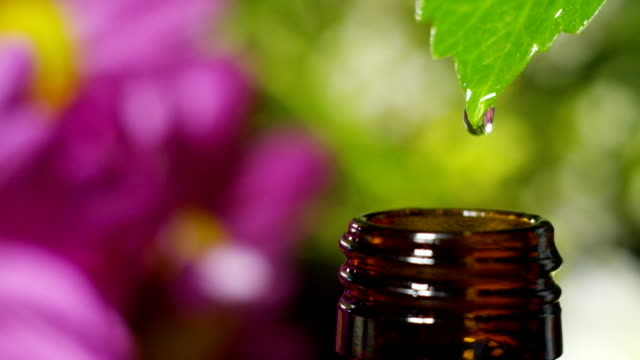 blend of essential oils with water drops, scents and aromas in aromatherapy for wellness and spa. concept of beauty. fragrant essential oil. essence drops fall from a leaf into pool in wellness center - alternative medicine stock videos and b-roll footage