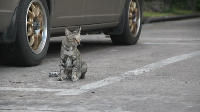 ブリント猫 - セメント点の映像素材/bロール