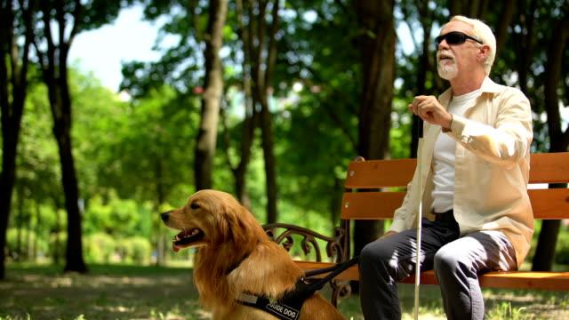 niewidomy emeryt stojący z ławki, trzymający psa przewodnika, który bezpiecznie chodził w parku - store filmów i materiałów b-roll