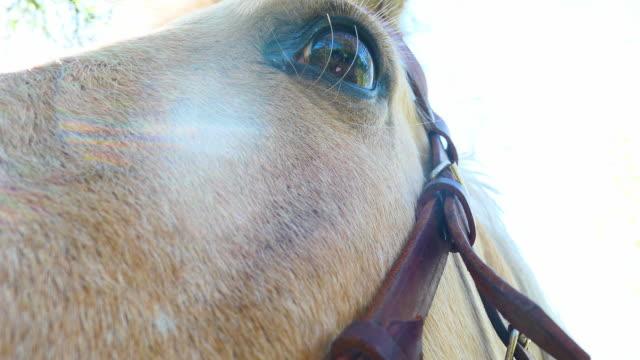 cerca de ojo de caballo Rubio - vídeo