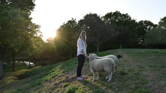 donna bionda nei primi anni '20 che nutre le foglie di ramo a due pecore - sussex occidentale video stock e b–roll