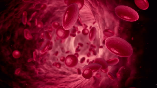 Blood Cell Animation video