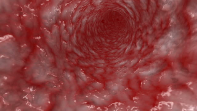 Blood cells moving in artery video