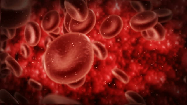 Blood cells or red blood cells flowing in stream in artery of human body video
