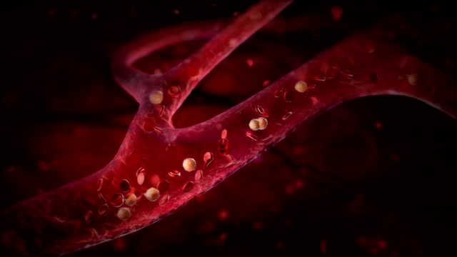 Blood cells pulsing down artery. HD Red blood cells flowing down in vain or artery. HD blood vessel stock videos & royalty-free footage