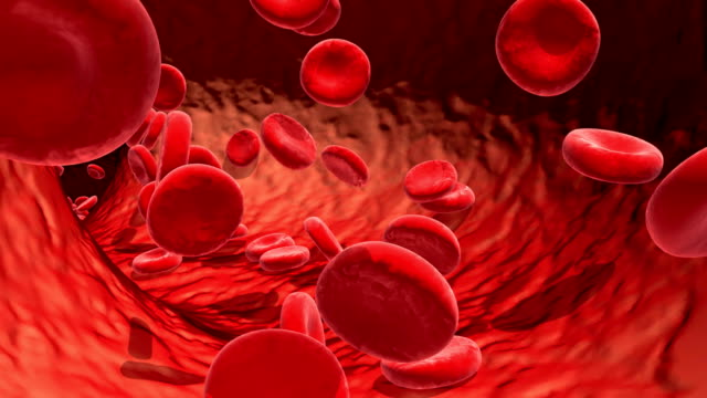 Blood cells traveling in a blood vessel