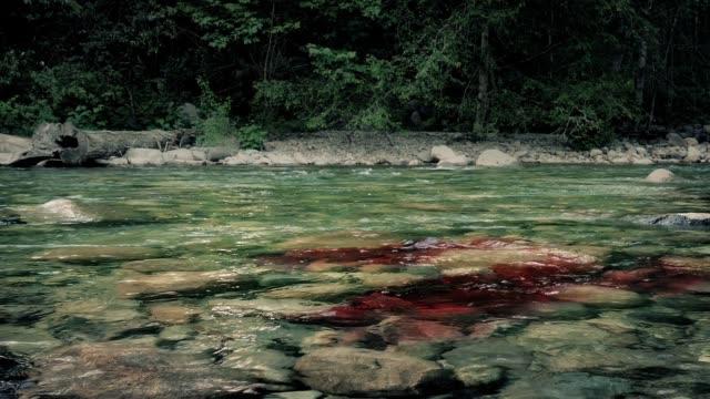 vidéos et rushes de le sang coule au-delà dans la rivière dans la forêt - étendue sauvage scène non urbaine