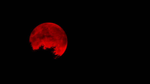 Blood Red Moon Above Trees Scary full moon glowing red in the forest count dracula stock videos & royalty-free footage