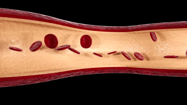 vídeos de stock e filmes b-roll de blood vessel animation - artéria
