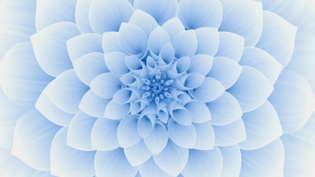 Blooming Blue Flower. Seamless Looped.