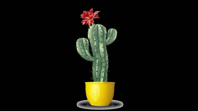 A blooming cactus grows from a yellow flowerpot. Funny cartoon 2D video animation of a cactus. Alpha channel. Transparent background