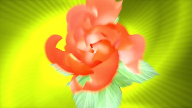Blooming flower - HD