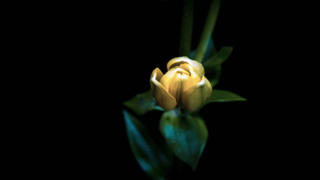 Blooming Flowers - Amazing Sequence Vol1 video