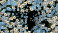istock Blooming flowers transition with alpha matte, suitable for video transitions 1221812758