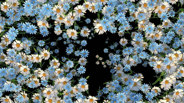 vídeos de stock e filmes b-roll de blooming flowers transition with alpha matte, suitable for video transitions - florescer