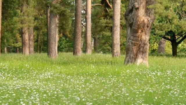 Blühende Wiese Wald. – Video