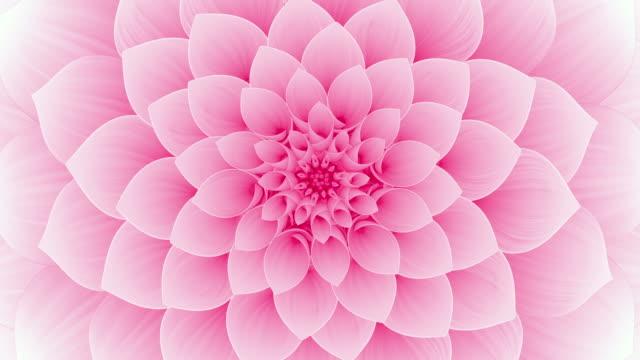 Blooming Pink Flower. Seamless Looped. Blooming Pink Flower. Seamless Looped. 4K. Ultra High Definition. 3840x2160. 4k stock videos & royalty-free footage